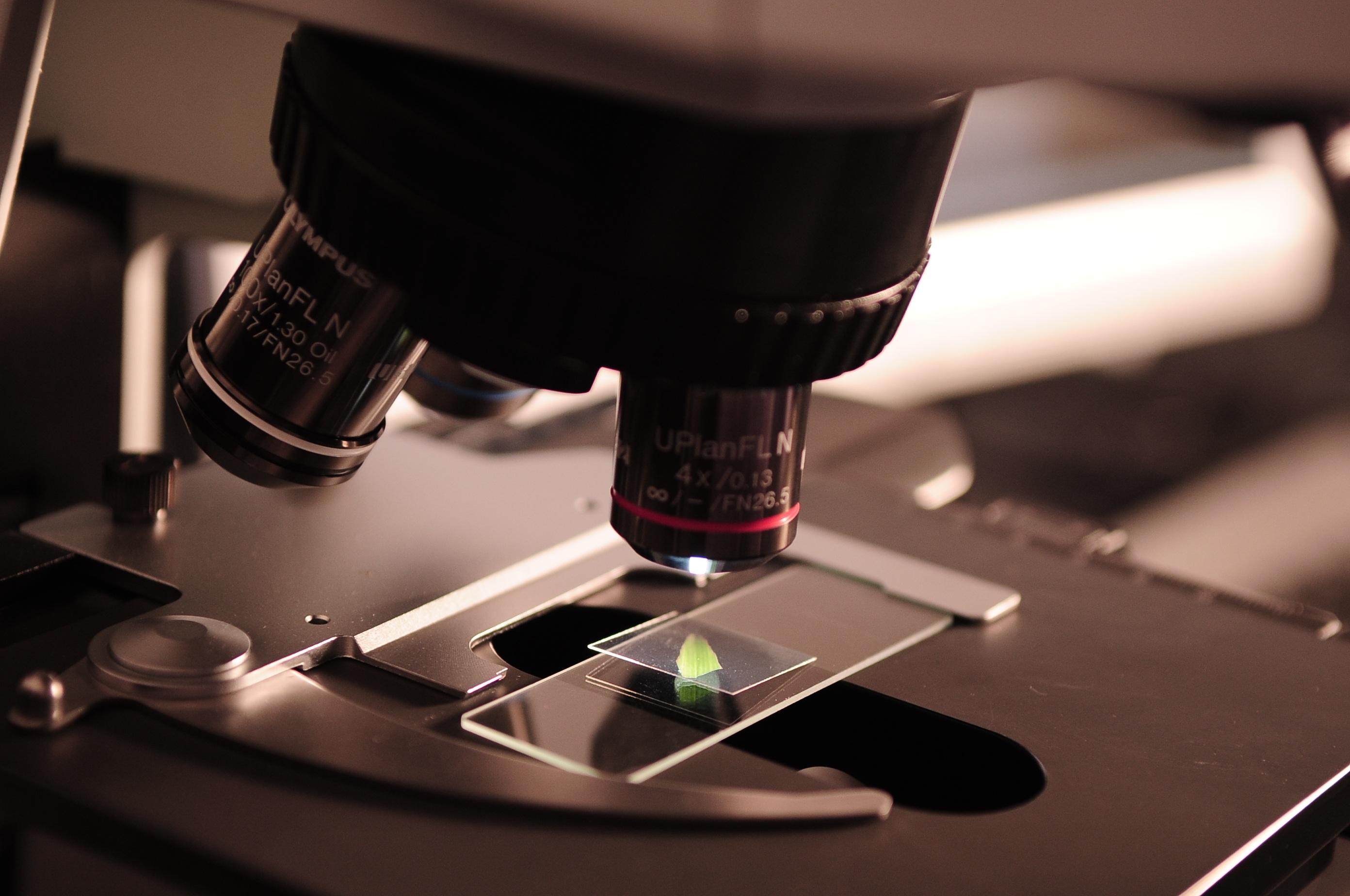Bionanopark-badania